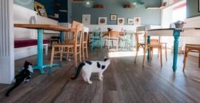 Romeow Cat Bistrot: gatti e cucina vegana a Roma
