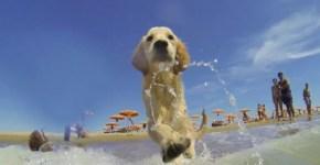 5 stabilimenti balneari per cani a Roma