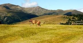 Sentieri con il cane a Cortina: località pet friendly