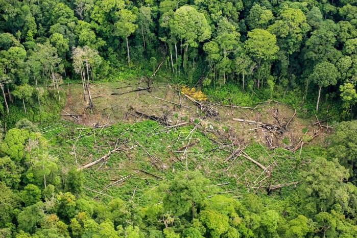 biodiversità e deforestazioni