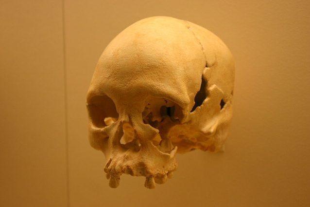 il fossile luzia al museo nazionale del brasile