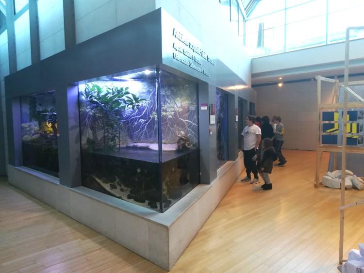gli acquari tropicali del muse trento