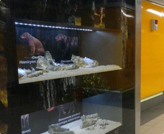 resti fossili esposti nella stazione di carpetana di Metro Madrid