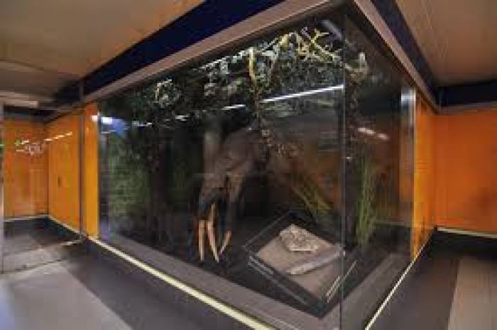 riproduzione di un animale del paleolitico nella metro madrid