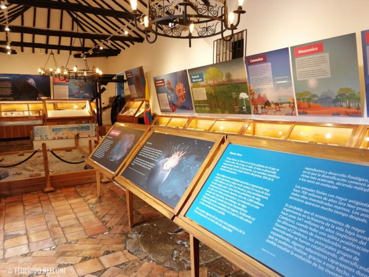 sala espositiva del museo paleontológico di villa de leyva