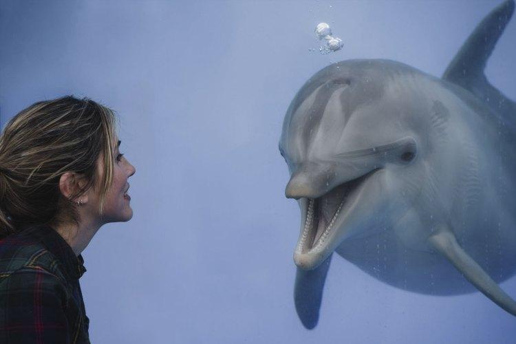 i delfini del delfinario nell'oceanografic all'interno della città delle arti e delle scienze di valencia