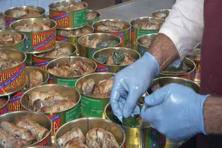 il processo di inscatolamento dell'anguilla marinata tradizionale delle valli di comacchio
