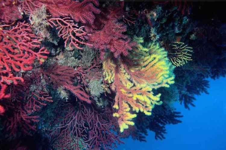 la flora che abita i fondali dell'isola di lipari