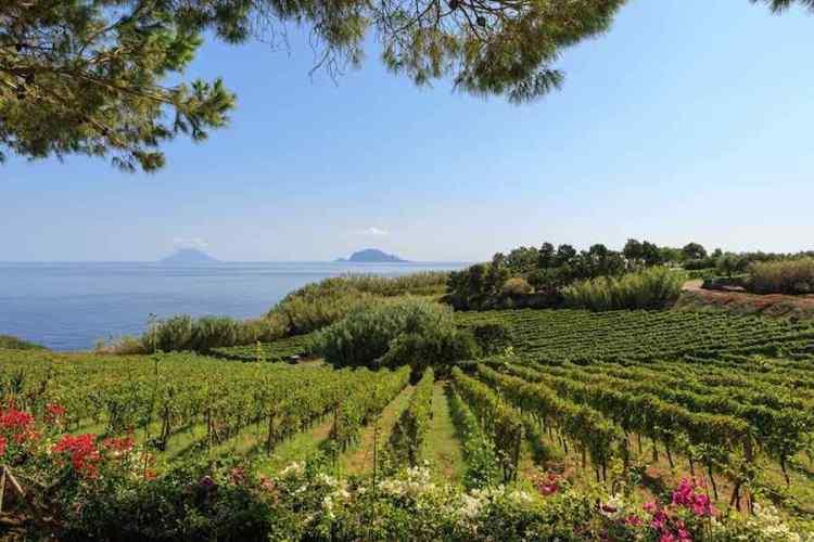le vigne di salina arcipelago isole eolie da cui si produce il malvasia