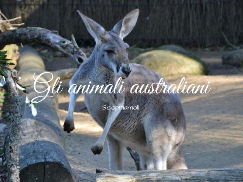 Gli animali australiani scopriamoli insieme viaggiando a testa alta