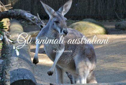 Gli animali australiani