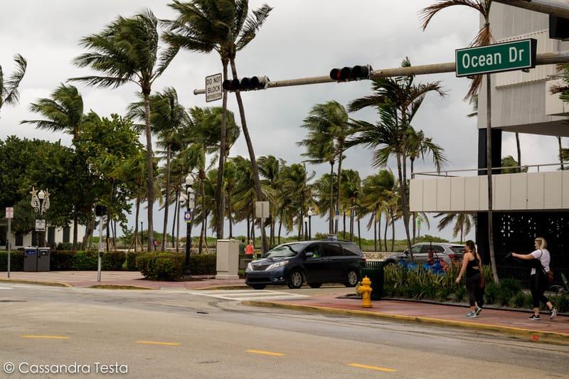 Le palme su Ocean Drive, Miami Beach