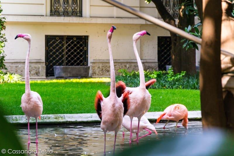I fenicotteri di Villa Invernizzi, Milano