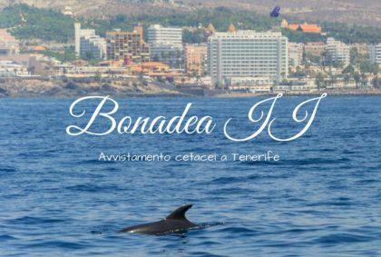 Avvistamento cetacei a Tenerife: Bonadea II