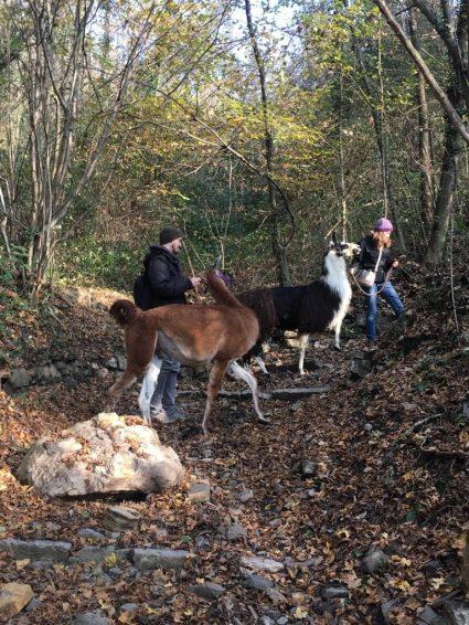 Trekking coi lama in Valle Imagna