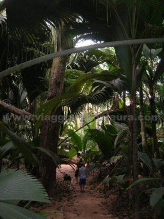 vallée de mai praslin seychelles