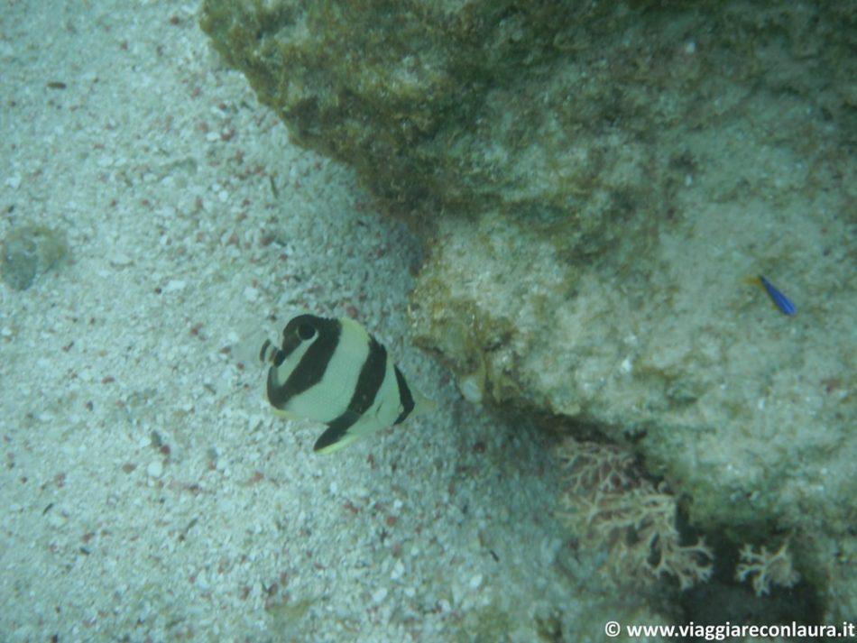 sandy island anguilla caraibi