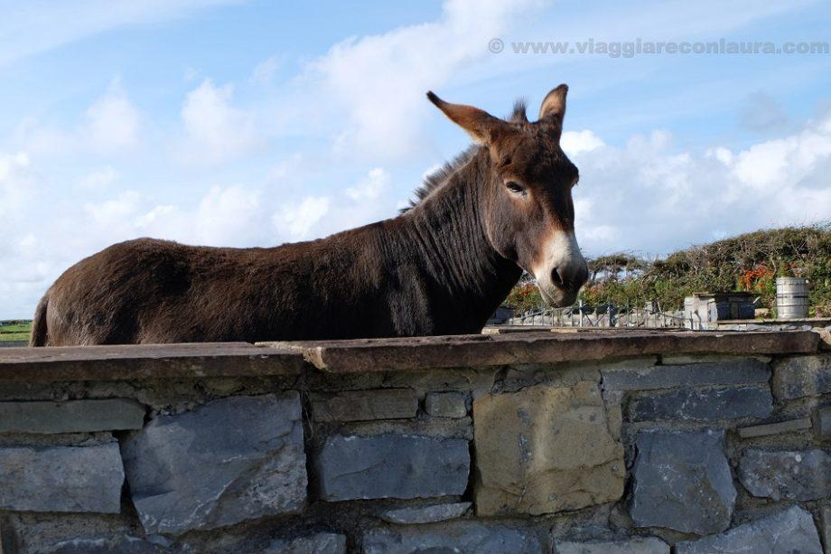 doolin ireland donkey