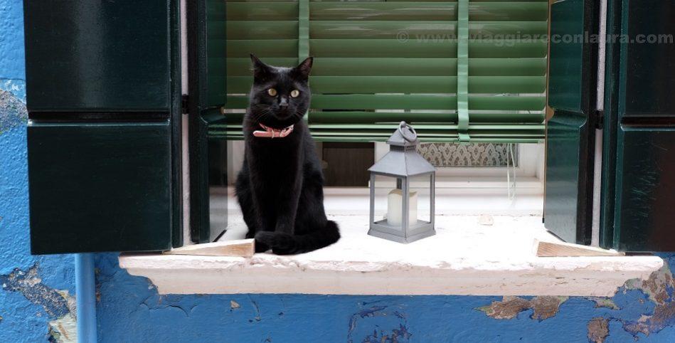 i gatti di burano