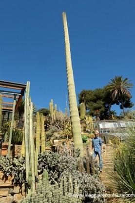 giardino esotico pallanca bordighera (4)