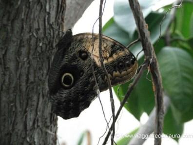 casa delle farfalle milano marittima