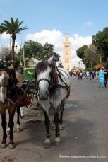 marrakech cosa vedere in 5 giorni