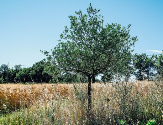 La bella Umbria