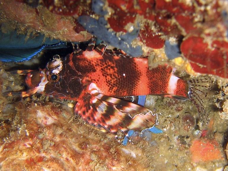 Gangga Island Indonesia