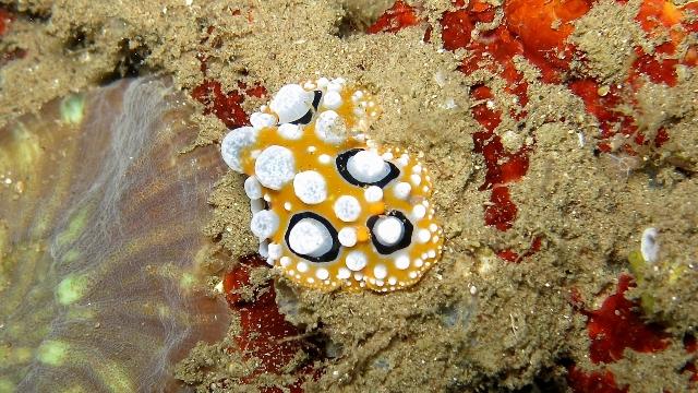 Dumaguete Filippine
