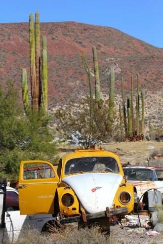 Baja California - Cataviñá
