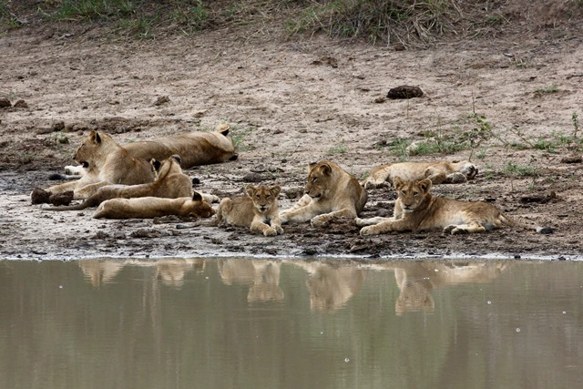 Sudafrica - Kruger National Park