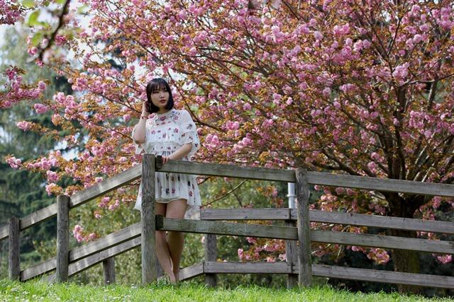 Hanami Fioritura dei Sakura