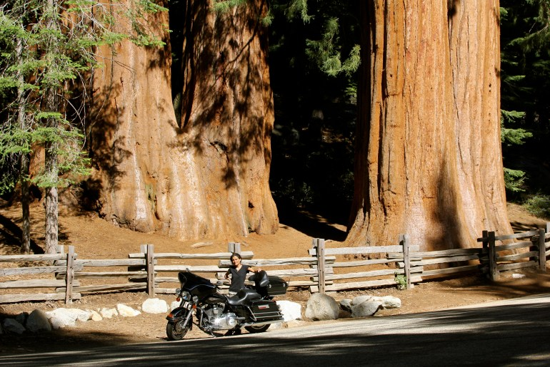 U.S.A. - California - Sequoia National Park