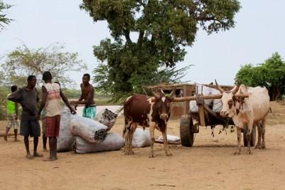 Madagascar - Belo Sur Tsiribihina - Scene di vita