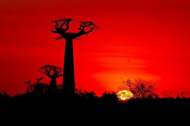 5 destinazioni da brivido Madagascar baobab