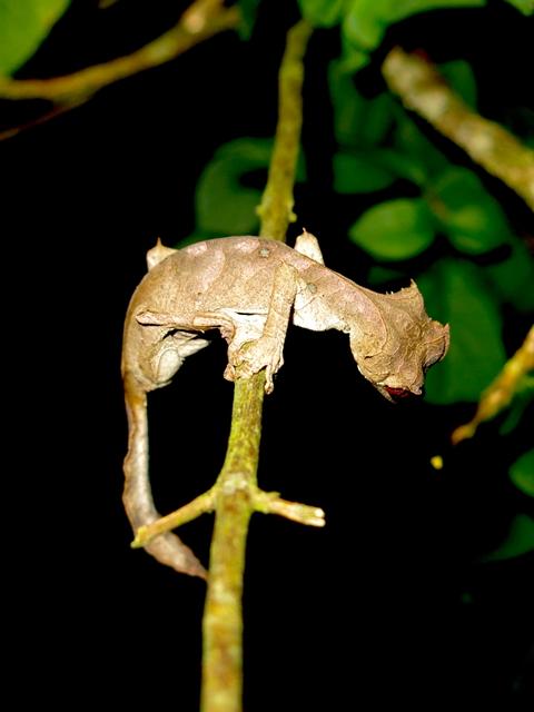 Madagascar animali