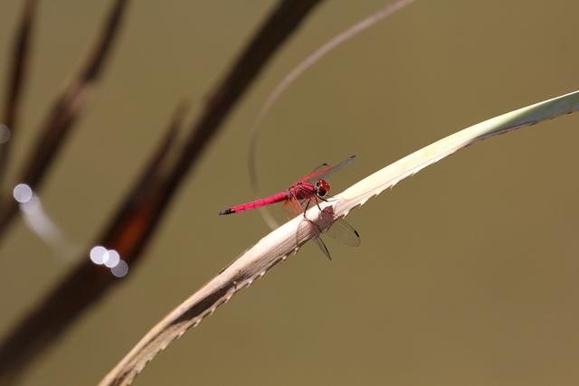 Madagascar Isalo parchi