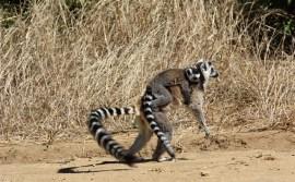 viaggi isola Madagascar cosa vedere parchi e lemuri