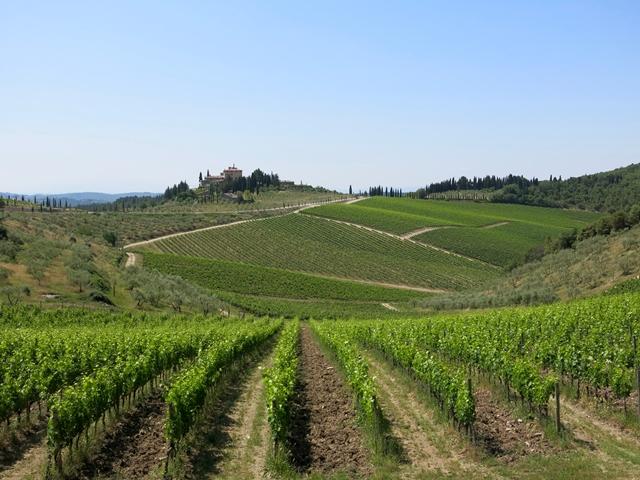 Dentro il vino Radda