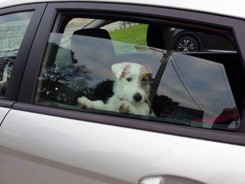 viaggiare-con-il-cane-come-portarlo-in-auto