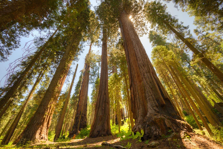 Sequoia NP - Foto Andrearoad
