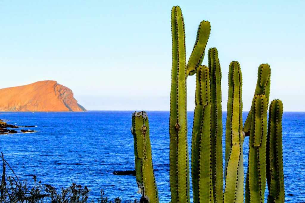 cactus e montana roja davanti ad oceano