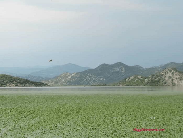vacanza-in-montenegro-lago-di-scutari