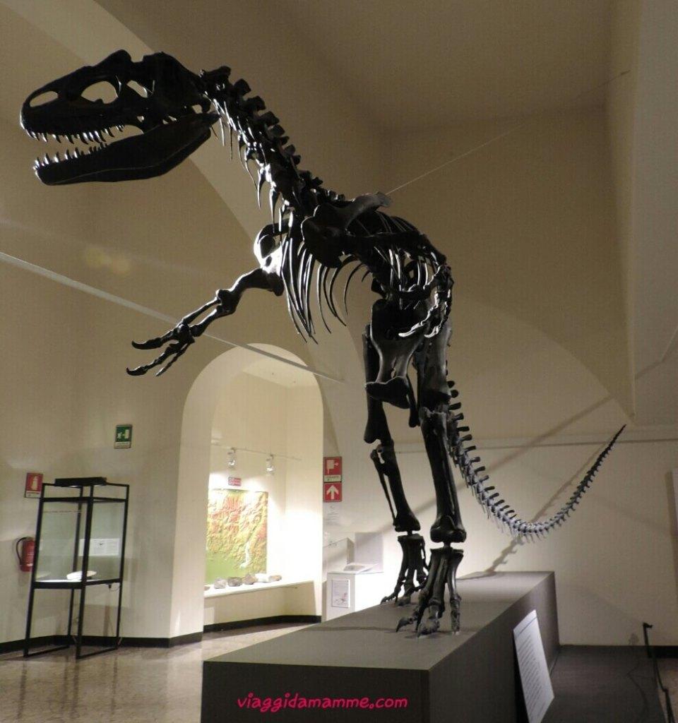 Bergamo con bambini Museo di Scienze Naturali Enrico Caffi Foto 8