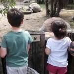 Una giornata a Le Cornelle Parco Faunistico con bambini
