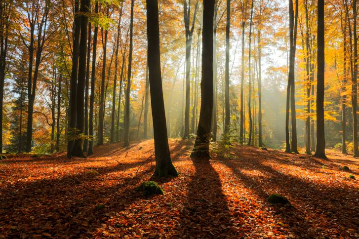 National Geographic Wallpaper Fall Foliage Autunno Foto Di Paesaggi Spettacolari
