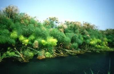 papiro fiume ciane siracusa visita guidata