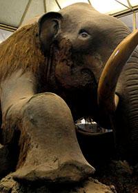 Mammut della Beresovka