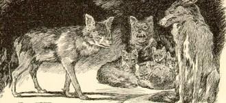Le bambine lupo di Godamuri
