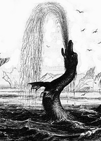 Serpenti di Mare